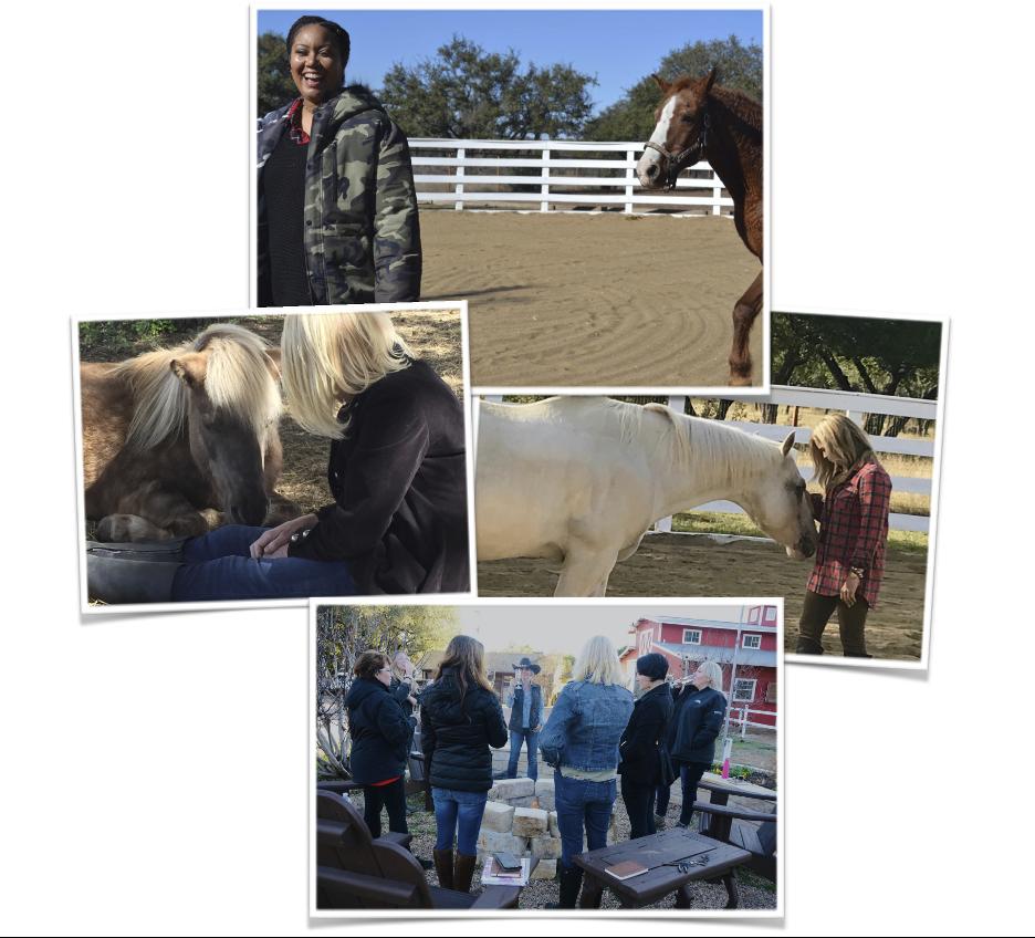 Horses top
